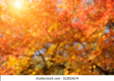 Autumn blurred sunny background.