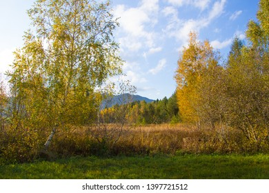 autumn bog landscape with colered trees