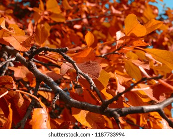 Autumn branch with yellowing leaves.