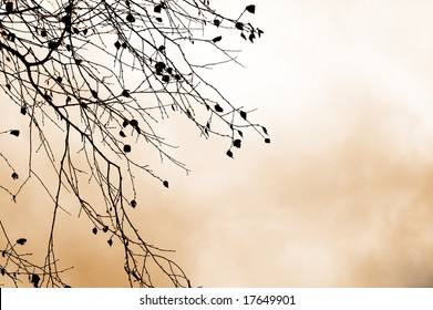 autumn branches against sky