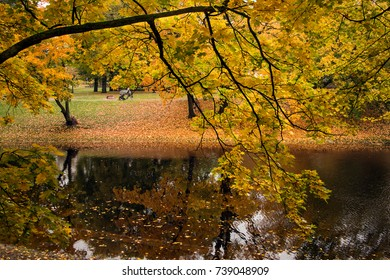 Autumn branches of a maple were inclined over the city channel.
