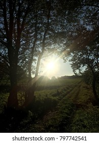 Autumn bright sundown on path through fields and forrest