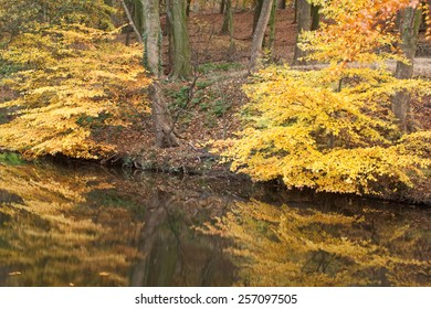Autumn Bushes reflected in Water