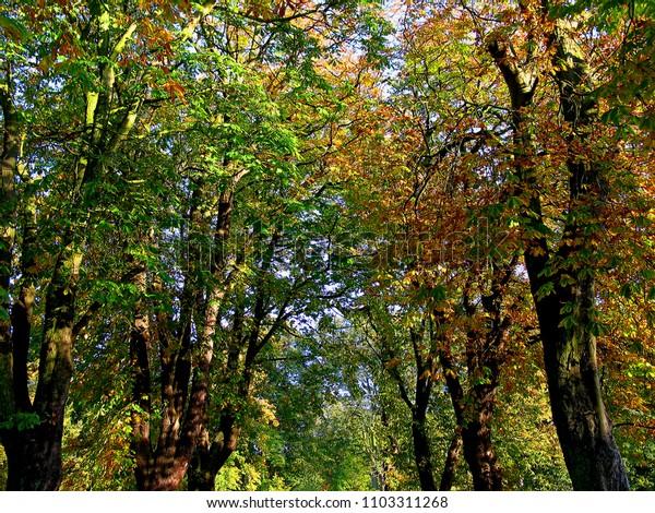autumn canopy textures