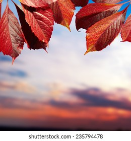 Autumn card of colored falling leafs isolated on white background