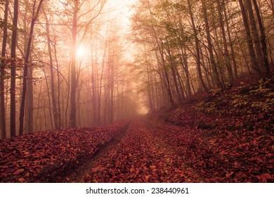 autumn in Carpathian