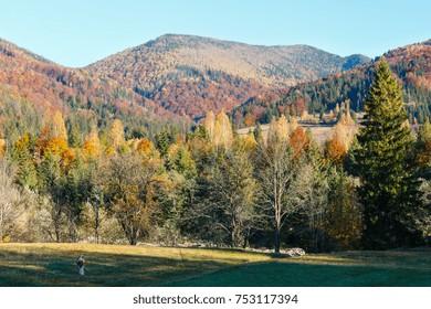 Autumn Carpathian Mountains landscape (Ivano-Frankivsk oblast, Ukraine). Rural scene.