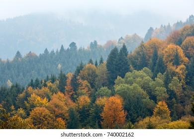 Autumn Carpathian Mountains landscape (Mizhhiria, Zakarpattia Oblast, Ukraine).