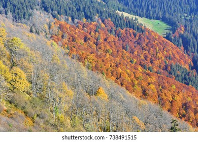 Autumn in the Carpathians. Area of Mount Sheshul.