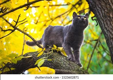 Autumn cat high on a tree