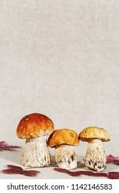 Autumn Cep Mushrooms with autumnal red leaves with copy space. Autumnal photo.