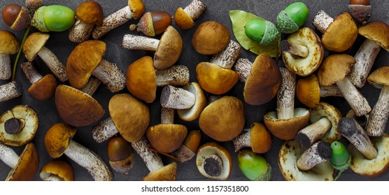 Autumn Cep Mushrooms. Ceps Boletus edulis over Wooden Dark Background, close up on wood rustic table. Cooking delicious organic mushroom. Gourmet food