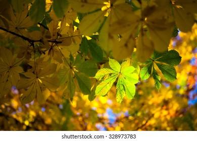 Autumn chestnut leaf - Shutterstock ID 328973783