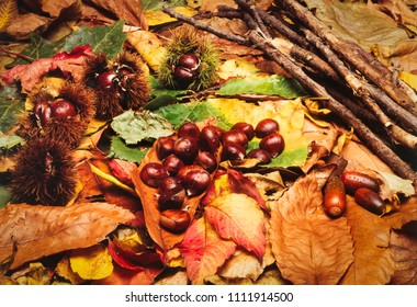 AUTUMN - CHESTNUTS AND LEAVES