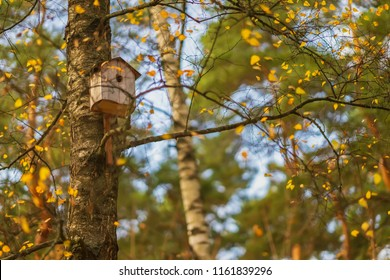 Autumn in the city park, an empty birdhouse, birds left it, flew to warm countries. Seasons, nostalgic mood concept