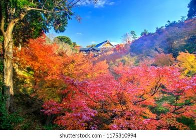 Autumn Clolors in Tofukuji Temple, Kyoto, Japan