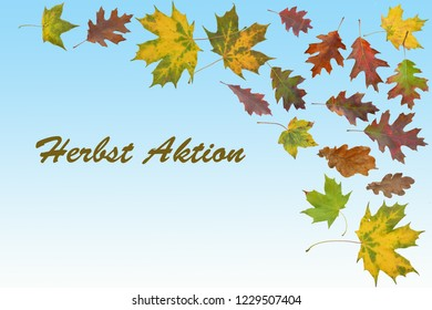 Autumn collage with autumn leaves