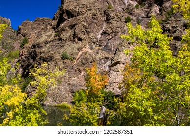 Autumn color brightens the dark cliffs of Black Canyon of the Gunnison National Park, which it carved over eons
