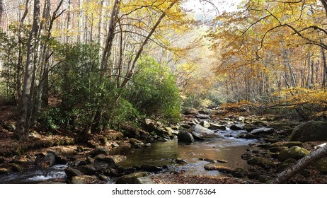 Autumn color forest stream