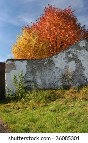 Autumn color leaves behind the old wall