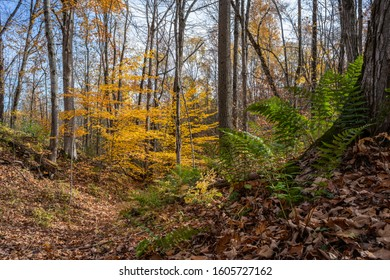 Autumn color leaves hiking trail in forest