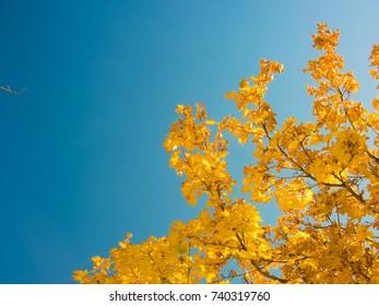 Autumn Color Leaves on Tree