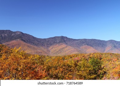 Autumn Color in the Mountains