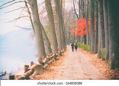 Autumn color in Nami island, South korea