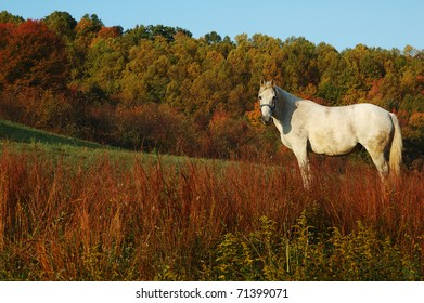 Autumn color with White Horse, Webster County, West Virginia, USA