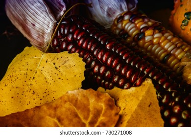 Autumn colored corn and colorful leaves