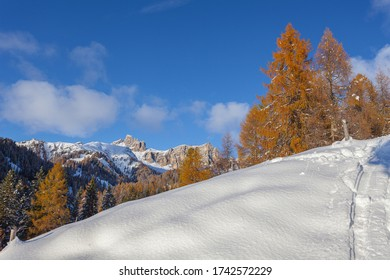 Autumn colored larch and fir trees at sunset with Croda da Lago peaks background, Dolomites, Italy. Concept: winter landscapes, Christmas atmosphere, Unesco world heritage, calm and serenity
