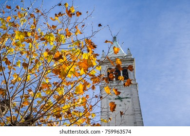 Autumn colored leaves on a blue sky background; Campanile (Sather tower) in the background, Berkeley, San Francisco bay, California
