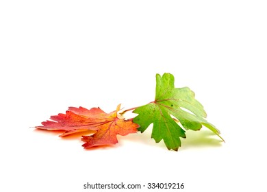 Autumn colored leaves on a white background