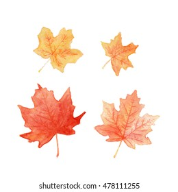 Autumn colored maple leaves set watercolor painting