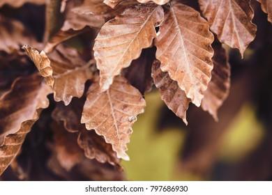Autumn colored tree