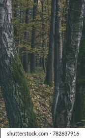 autumn colored trees in the park covered with moss in wet sunny day - vintage retro look