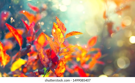 Autumn colorful bright Leaves swinging in a tree in autumnal Park. Autumn colorful background, fall backdrop. Backlit, sun flare. Beautiful nature scene. Autumnal park