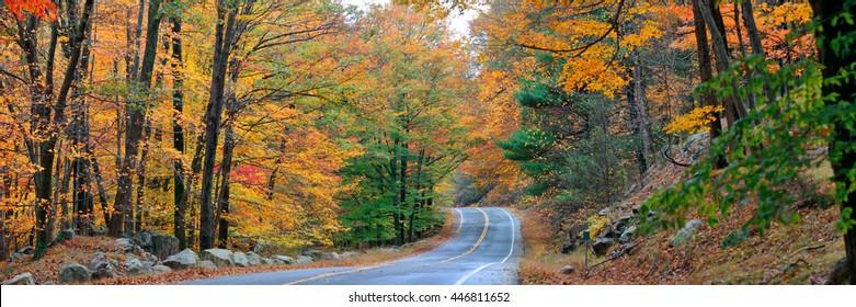 Autumn colorful foliage and natural landscape panorama.
