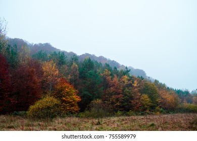 Autumn colorful forest in the morning. Bright golden forest  landscape.