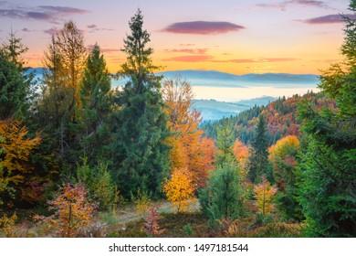 Autumn colorful forest in Mountains before sunrise, autumn season landscape