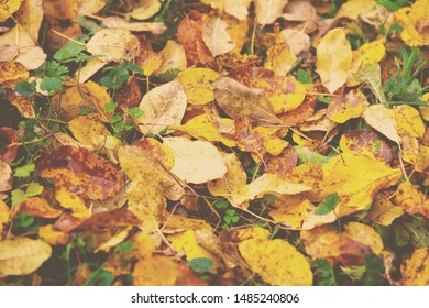 Autumn colorful leaf litter. Nature background. Dry fallen leaves on the grass