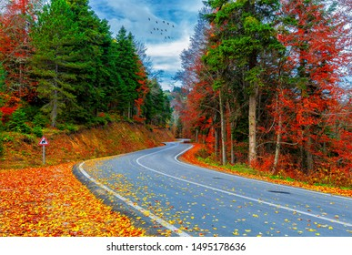 Autumn. Colorful leaves falling from trees. Wooden forest houses. Amazing landscape. Uludag National Park. Istanbul, Bursa, Turkey.
