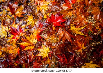 Autumn colorful leaves on the ground