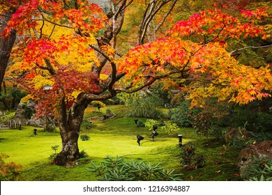 Autumn with colorful maple leaves in japan