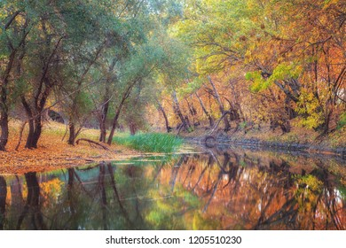 Autumn with colorful trees and long exposure photo of river