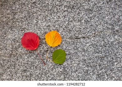 Autumn Colorful Wood Leaves. Red, yellow and green. The background is gray stone.