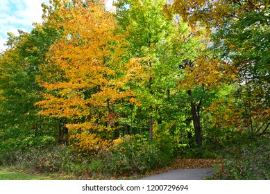 Autumn colors along a bicycle path in Kenosha Wisconsin.