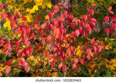 Autumn colors at its best