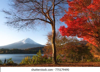 Autumn Colors Blooming with Mount Fuji in Background. November 2017.