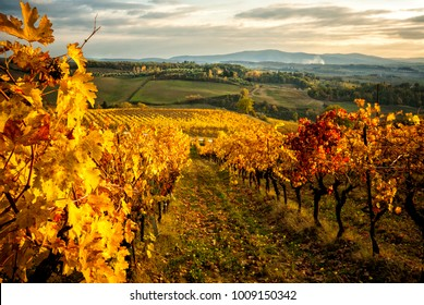 Autumn colors of the Chianti vineyards between Siena and Florence. Italy